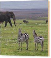 Africa Tanzania African Elephant Wood Print