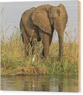 Africa, Zambia Elephant Next To Zambezi Wood Print