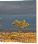 African Acacia Sunrise Wood Print