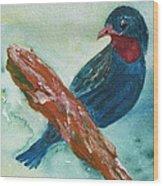 #african Bluebird Wood Print