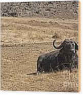 African Buffalo V2 Wood Print