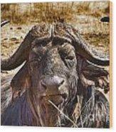 African Buffalo V3 Wood Print
