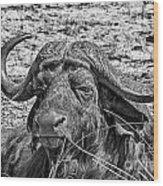 African Buffalo V4 Wood Print