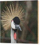 African Crowned Crane 1 Wood Print
