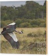 African Crowned Crane Wood Print