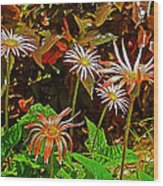 African Daisies In Aswan Botanical Garden On Plantation Island In Aswan-egypt Wood Print