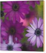 African Daisy Collage Wood Print