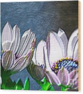 African Daisy Detail Wood Print