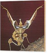 African Devil Mantis Wood Print