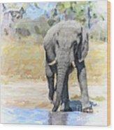 African Elephant At Waterhole Wood Print