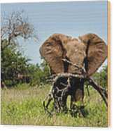 African Elephant Carying A Tree With Its Trunk Wood Print