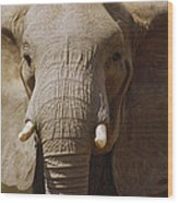 African Elephant Close Up Amboseli Wood Print