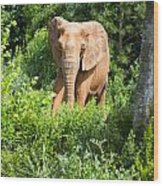 African Elephant Coming Through Trees Wood Print