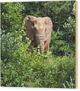 African Elephant Eating In The Shrubs Wood Print