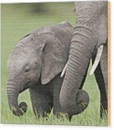 African Elephant Juvenile And Calf Kenya Wood Print