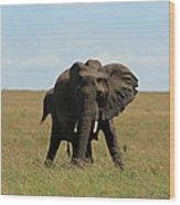 African Elephant Masai Mara Kenya Wood Print