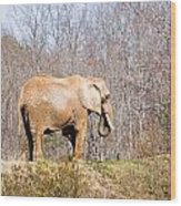 African Elephant On A Hill Wood Print