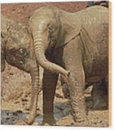 African Elephant Orphans Playing In Mud Wood Print
