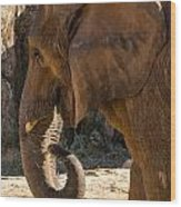 African Elephant Profile Wood Print