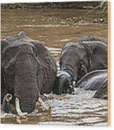 African Elephants Having A Bath In Mara Wood Print