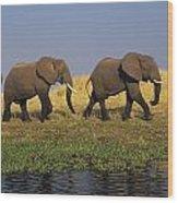 African Elephants, Lake Kariba Wood Print