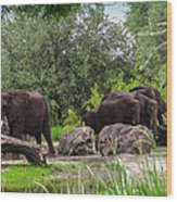 African Elephants  Wood Print