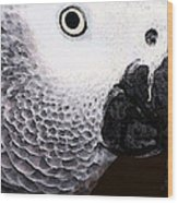 African Gray Parrot Art - Seeing Is Believing Wood Print