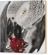 African Grey And Cherry  Wood Print