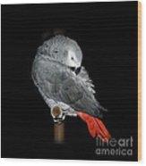 African Grey Parrot Wood Print