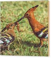 African Hoopoe Feeding Chick Wood Print