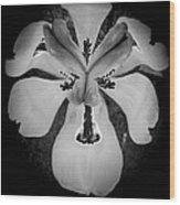 African Iris Bw Wood Print