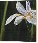 African Iris Dewed Wood Print