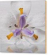 African Irises Xv Wood Print