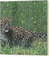 African Leopard Cub In Tall Grass Endangered Species Wood Print