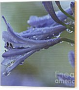 African Lilies  Wood Print