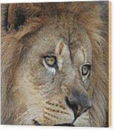 African Lion #5 Wood Print