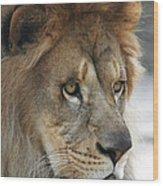 African Lion #8 Wood Print
