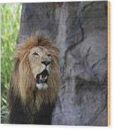 African Lion Roar Wood Print