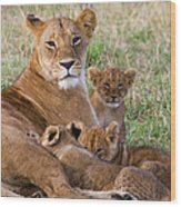 African Lioness And Young Cubs Wood Print
