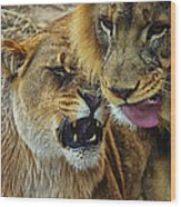 African Lions 7 Wood Print