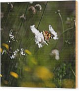 African Monarch Butterfly In Garden Wood Print