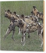 African Painted Hunting Dogs Wood Print