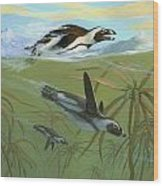 African Penguins Wood Print
