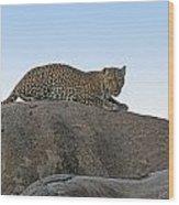 African Safari Leopard 1 Wood Print