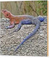 African Safari Lizard Wood Print