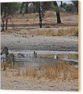 African Series Zebras And Pelican Wood Print