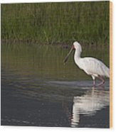 African Spoonbill   #0202 Wood Print