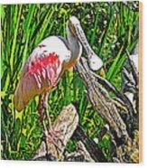 African Spoonbill In San Diego Zoo Safari Park In Escondido-california Wood Print