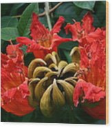 African Tulip Tree Wood Print