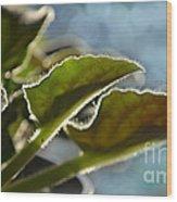 African Violet Leaves With Bokeh   Wood Print
